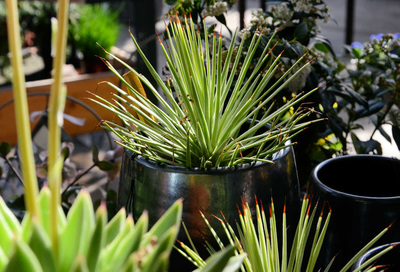 Sommerer co arlesheim indoor begr nung innenraum for Innenraum pflanzen